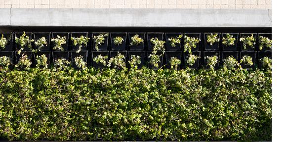 いいこといっぱい壁面緑化とは?